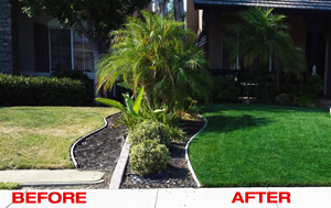 Turf Colorant Lawn Paint